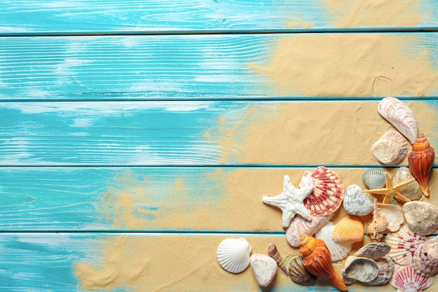 Summer time concept with sea shells