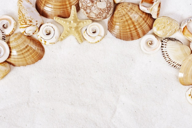 Summer time concept with seashells, star, sea pebbles on white sand background.