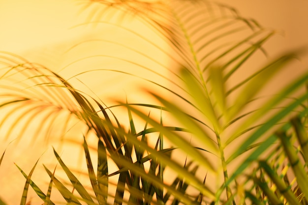 Summer travel concept. shadow of exotic palm leaves is laying on pastel yellow wall background.