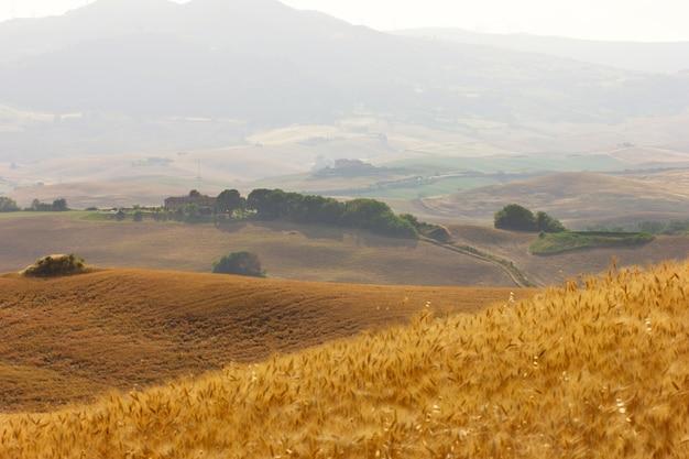 ブドウ園とヒノキの木への夏の旅行。イタリアのトスカーナの緑と黄色の丘の眺め。