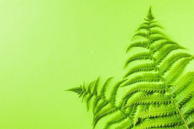 녹색 고비와 여름 열 대 배경