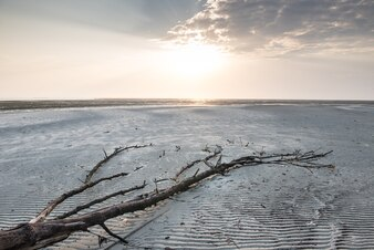 Summer tropical beach and dead tree in Thailand.