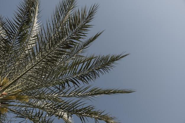 푸른 하늘에 대 한 여름 열 대 코코넛 야 자 나무 잎