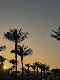 일몰 하늘을 배경으로 여름 열대 코코넛 야자 나무