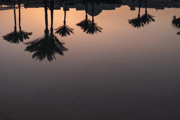 여름 열 대 코코넛 야자수와 물에 일몰 하늘 실루엣 반사