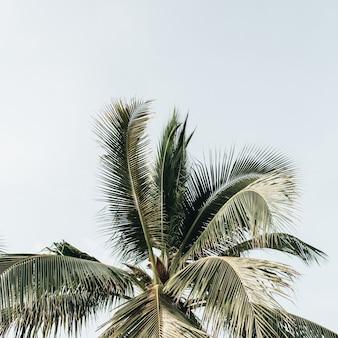 青い空を背景に夏のトロピカルグリーンココナッツヤシの木。テキスト用の空白スペースがあるニュートラルな背景。夏と旅行のコンセプト