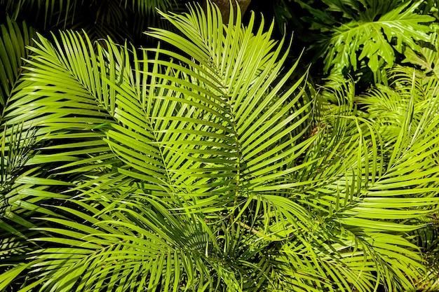 Летние тропические листья джунглей