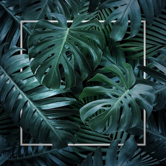 Summer tropical leaves on black background
