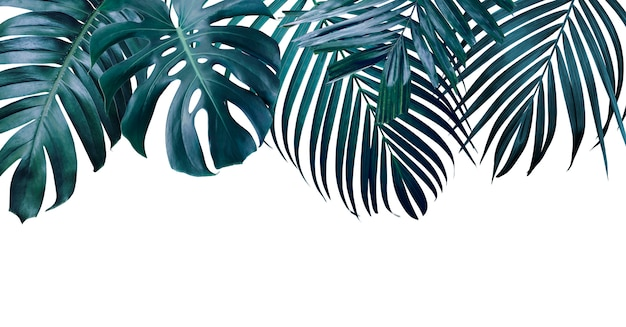 Summer tropical leaves on white background
