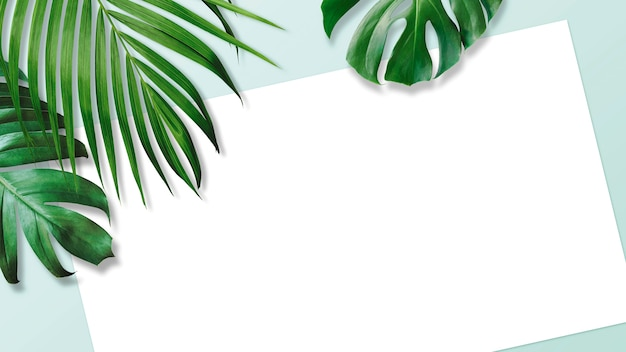 Summer tropical leaves with blank white paper