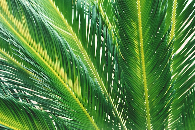 Summer tropical palm tree branches close up