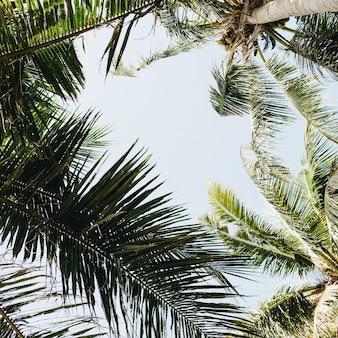 Летние тропические пальмы против голубого неба. летняя концепция на пхукете