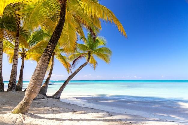 夏休みと熱帯のビーチのコンセプト。ヤシの木とターコイズブルーの海のある砂浜。休暇の島。