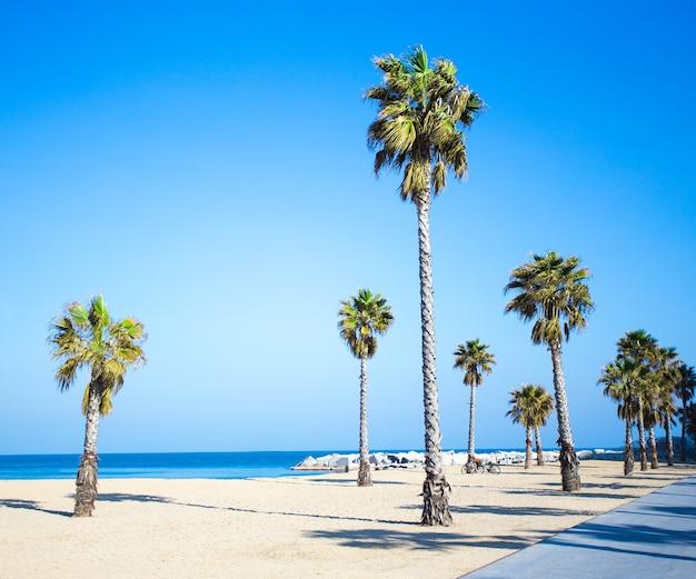 여름 휴가 개념 - 산책로, 해변, 푸른 하늘 위의 야자수