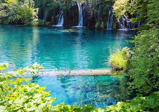 Summer view of beautiful small waterfalls and  trunk of dry tree in clear azure lake (plitvice lakes national park, croatia)