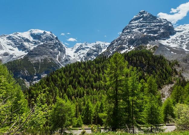 Летний вид с альпийской дороги перевала стельвио с еловым лесом и снегом на вершинах гор альп, италия