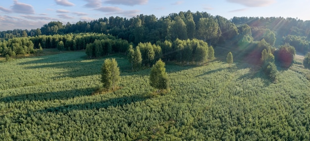 Летнее теплое солнце светлый лес с высоты птичьего полета как летний фон, вид сверху