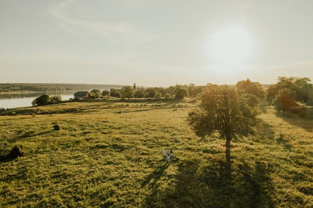 여름 따뜻한 햇볕이 잘 드는 필드입니다. 태양 광선이 통과하는 초원과 키 큰 나무