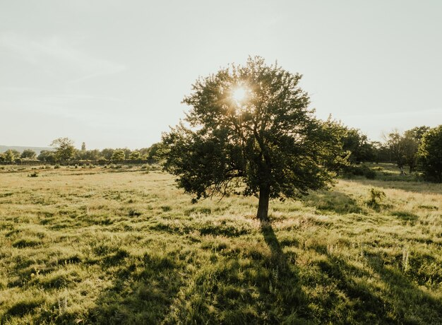 Summer warm sunny field. meadow and tall trees through which the rays of the sun make their way