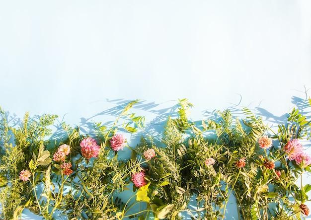 Summer wild flowers on blue pastel background in sunlight.