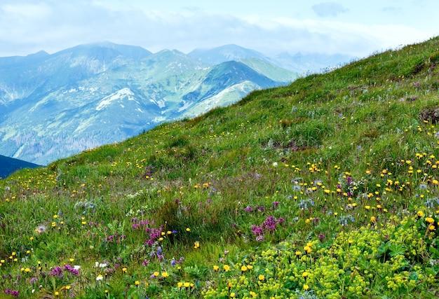 Summer wild flowers in tatra mountain, poland.