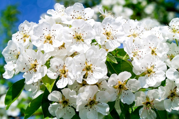 白の夏の素晴らしい花の咲く木