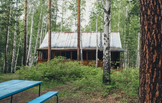 Summer wooden house in a birch grove. camping in the woods. eco-friendly construction