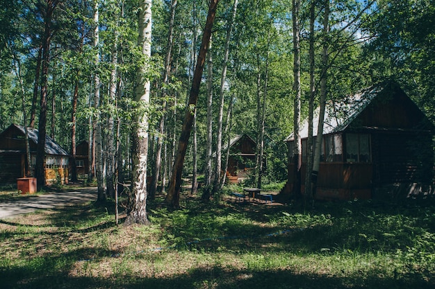 Летний деревянный домик в березовой роще. кемпинг в лесу. экологичное строительство
