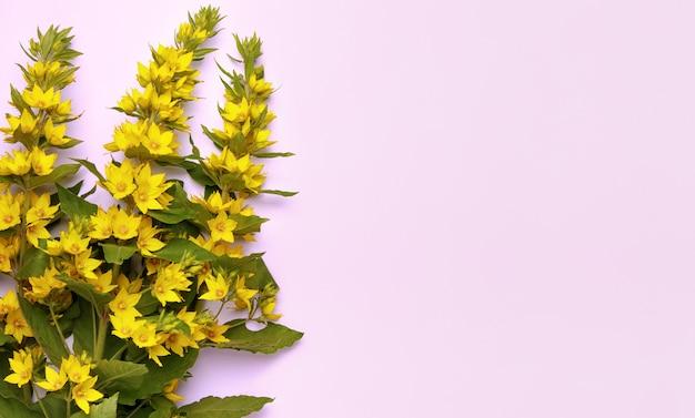 핑크 파스텔 배경에 여름 노란색 꽃