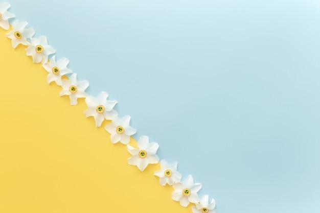 Квартира концепции летней коллекции лежала на желтом и синем фоне с богато украшенными цветочными головками нарцисса. фото высокого качества