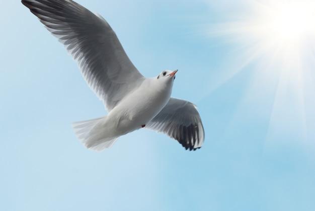 Солнце и чайка на голубом небе.