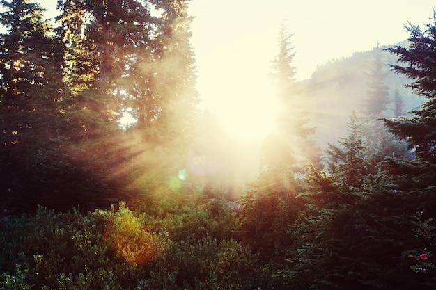 緑の森の晴れた日に太陽の光