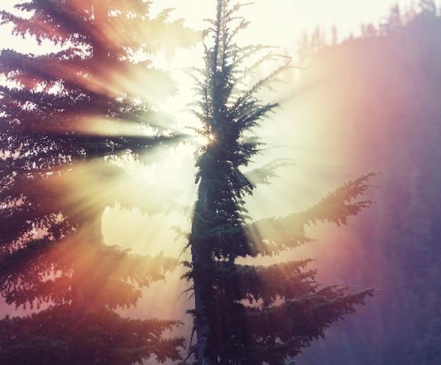 夏の緑の森の太陽光線