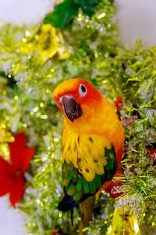 Попугай sun conure сидит и смотрит