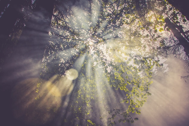 Sun flares go through the fog or smoke between green leaves in the forest