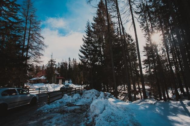 겨울 숲의 태양은 나무 사이에서 빛난다