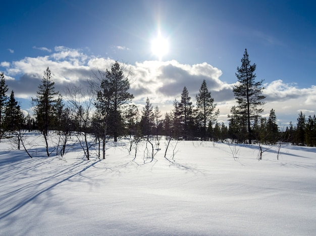 Sun light over a beautiful winter forest covered of snow in finland