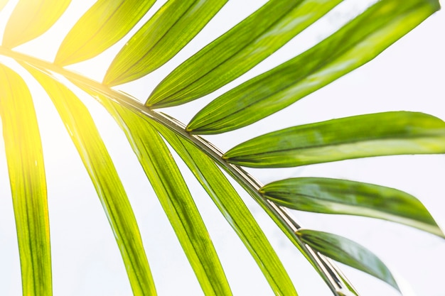 Sun lighting through palm leaf
