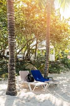Sun loungers between trees on sand