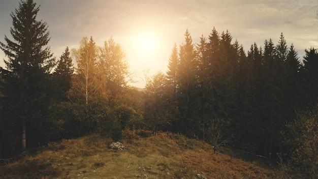 山頂の松の木に沈む太陽空中誰も自然景観田園地帯の村緑