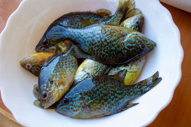 썬 퍼치. 접시에 다채로운 물고기입니다.
