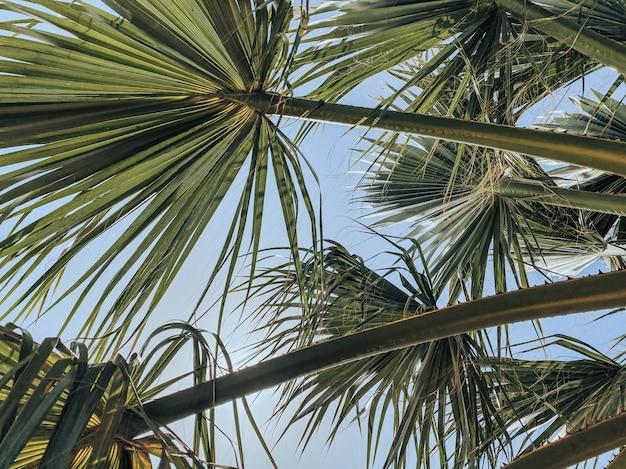 ヤシの木の枝を通り抜ける太陽光線。レクリエーションと観光の概念。旅行写真。