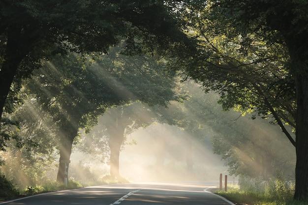 霧のかかった朝、太陽光線が道路沿いの木々を通り抜ける