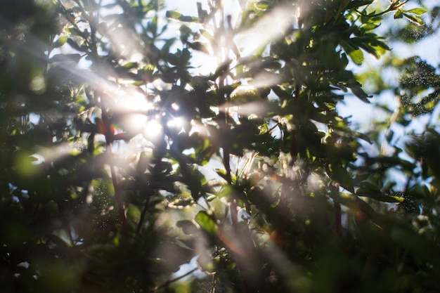 The sun's rays pass through the foliage of plants in the garden.