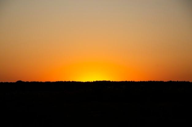 森の木々の地平線に沈む夕日
