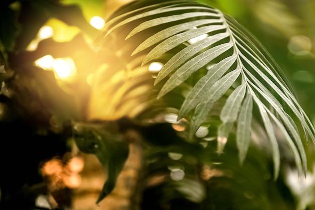 ヤシの木の葉を通して輝く太陽