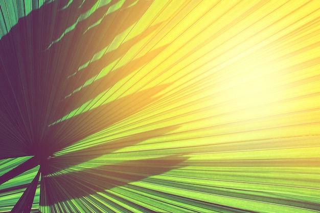 Sun shining through striped of green palm leaf. abstract green natural background texture.