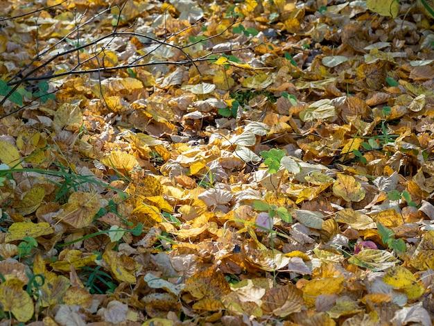 太陽光線が落ち葉を照らします。秋の風景