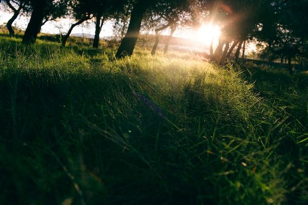Sunbeams crossing a mediterranean forest.