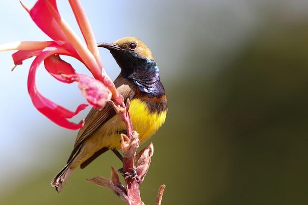 サンバードカラフルな動物の野生動物が花を保持